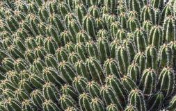 Babycactussen in Jardin DE Cactus Royalty-vrije Stock Fotografie