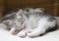 babycats Royaltyfria Foton