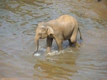Babyelefant auf dem Fluss Stockfoto