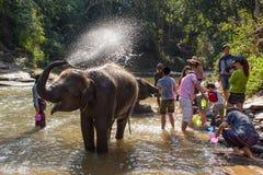 Babyelefant, der im Fluss nahe Chiang Mai, Thailand badet Stockfotografie