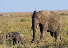 Babyelefant geht es nah an seiner Mutter afrika kenia tanzania serengeti Maasai Mara Stockbilder