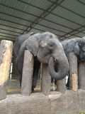 Babyelefant-WarteLebensmittel Lizenzfreie Stockfotos