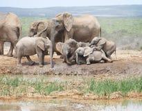 Babyelefanten, die das Fallen spielend sich schlecht benehmen lizenzfreies stockfoto