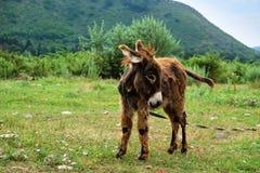 Babyesel im Gras stockfoto
