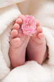 Babyfeet con la flor rosada Foto de archivo