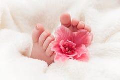 Babyfeet con la flor rosada Imagen de archivo