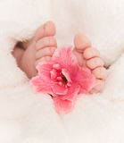 Babyfeet med rosa färgblomman Arkivbild