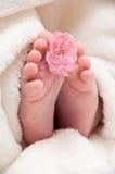 Babyfeet met roze bloem Stock Foto