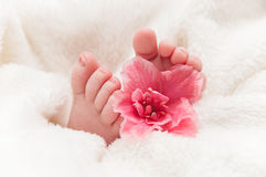 Babyfeet with pink flower Stock Image