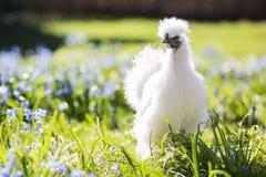 Babyhenne, die im Gras sich versteckt Stockfotografie
