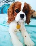 Babyhond royalty-vrije stock foto