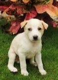 Babyhund Stockfotografie