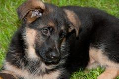 Babyhund Lizenzfreies Stockfoto