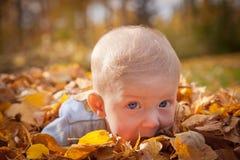 Babyjongen in bladeren Stock Afbeelding