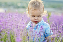 Babyjongen in lavendel stock fotografie