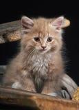 Babykat Stock Fotografie