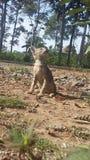 Babykat cutes stock afbeeldingen