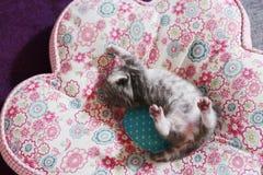 Babykatje stock afbeelding