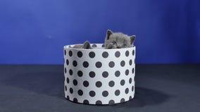 Babykatje het verbergen in een ronde doos stock videobeelden