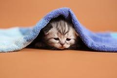 Babykatje onder een blauwe handdoek stock afbeeldingen