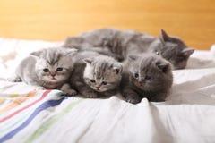 Babykatjes, eerste dagen van het leven royalty-vrije stock afbeelding