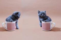 Babykatten Royalty-vrije Stock Afbeeldingen