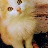 Babykatze Lizenzfreies Stockbild