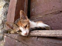 Babykatze, die in Griechenland sich entspannt Stockbilder