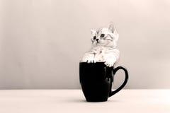 Babykatzen in einem Becher Stockbild