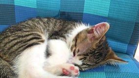 Babykatzenschlafen stock footage