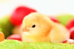 Babykip Stock Foto's