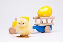 Babyküken, buntes helles Thema des Frühjahres Stockbilder