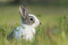 Babykonijn in het gras Stock Foto's