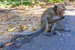 Babymakakenaffe, der Frucht isst Lizenzfreie Stockfotografie