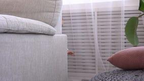 Babymeisje het verbergen achter bank stock footage