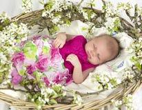 Babymeisje in roze binnen van mand met de lentebloemen. Royalty-vrije Stock Foto's