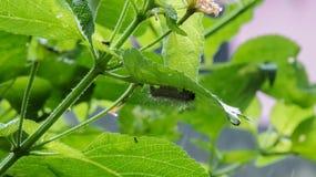 Babymot of Algemene worm die schuilplaats nemen achter groene bladeren Royalty-vrije Stock Afbeeldingen