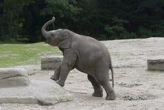 Babyolifant Royalty-vrije Stock Afbeelding