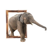 Babyolifant in bamboekader met 3d effect Stock Foto's