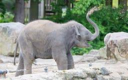 Babyolifant het spelen Royalty-vrije Stock Foto's