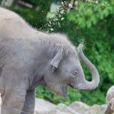 Babyolifant het spelen Stock Afbeelding
