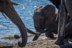 Babyolifant het spelen in modder naast rivier Royalty-vrije Stock Foto's