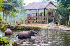 Babyolifanten die in water in Bali, Indonesië enjoing stock afbeeldingen