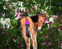 Babypaard Royalty-vrije Stock Fotografie