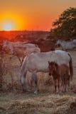 Babypaard en zijn moeder die in het weiland rusten Rode brand sunsets Stock Fotografie