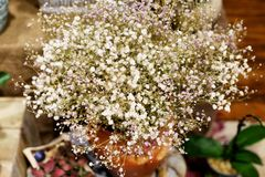 Baby s breath flowers arrangement Royalty Free Stock Photos
