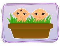 Babys in een pot Royalty-vrije Stock Fotografie