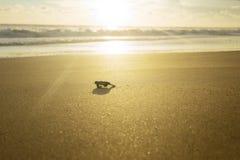 Babyschildkröte, die in Richtung zum Ozean geht lizenzfreies stockbild