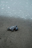 Babyschildpad die eerste maatregelen treffen aan de waterenrand royalty-vrije stock fotografie