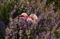 Babyschuhe auf dem Lavendelgebiet Stockfoto